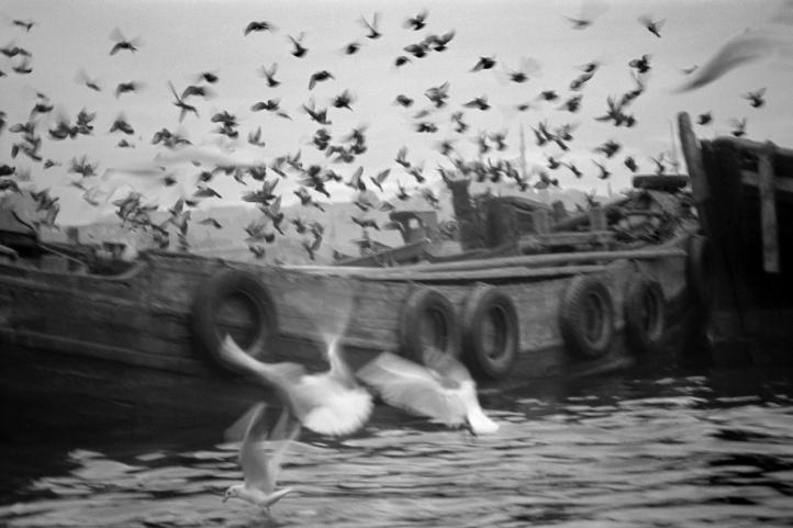 Kähne und Möven, Goldenes Horn, 1955